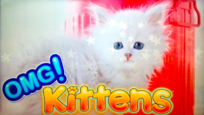 Top Slot Game of the Month: Omg Kittens Slot